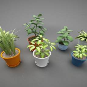 現代風格植物3D模型【ID:246965841】