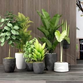 现代植物3D模型【ID:233034879】