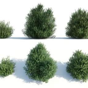 现代灌木3D模型【ID:249240814】