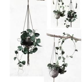 现代挂件植物3D模型【ID:235770845】