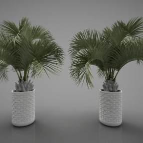 現代風格植物3D模型【ID:252624893】