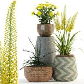 盆栽植物3D模型【ID:243892857】