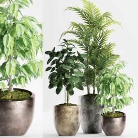 现代绿植盆栽组合3D模型【ID:236260899】