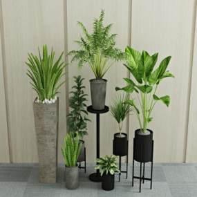 现代植物盆栽3D模型【ID:233208839】