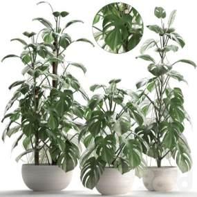 现代Monstera植物集合3D模型【ID:233695832】