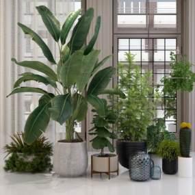 现代植物模型3D模型【ID:233034863】