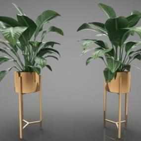 現代風格植物3D模型【ID:247555838】