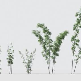 现代绿植竹子3D模型【ID:242495851】