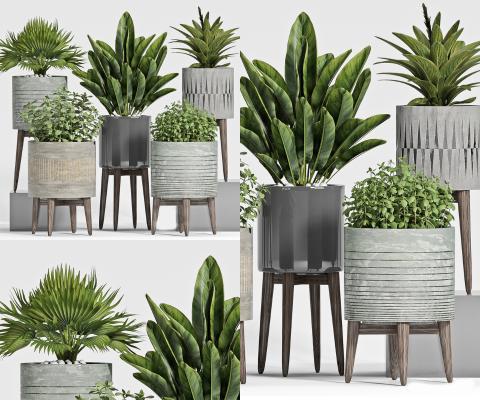 现代植物盆栽3D模型【ID:252882815】