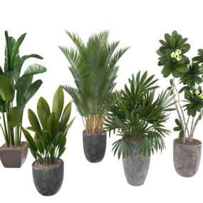 现代绿植盆栽3D模型【ID:233660887】