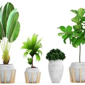 盆栽植物3D模型【ID:243892812】