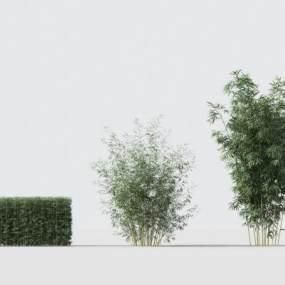 现代绿植竹子3D模型【ID:242495808】