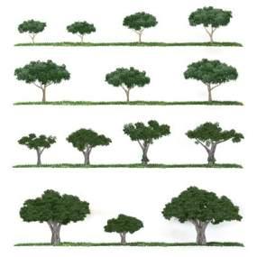 现代省面植物树简模3D模型【ID:233108885】