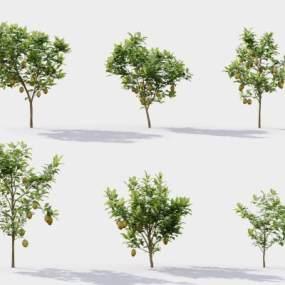 現代樹3D模型【ID:246532886】