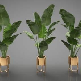 現代風格植物3D模型【ID:252624854】
