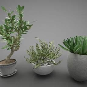 現代風格植物3D模型【ID:248206871】