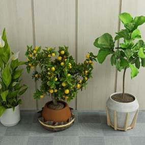 现代绿植盆栽3D模型【ID:231639824】