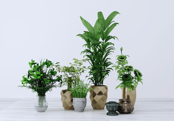 现代绿植盆栽3D模型【ID:245643804】