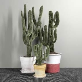 現代室內植物盆栽組合3D模型【ID:252374826】