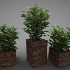 現代風格植物3D模型【ID:248783807】