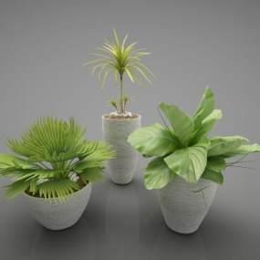 現代風格植物3D模型【ID:248782833】