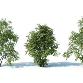 現代灌木3D模型【ID:249240834】