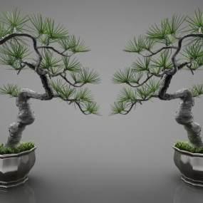 新中式风格盆栽3D模型【ID:244239825】