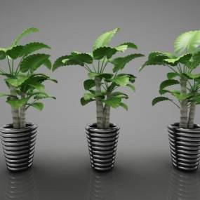 現代風格植物3D模型【ID:247555827】