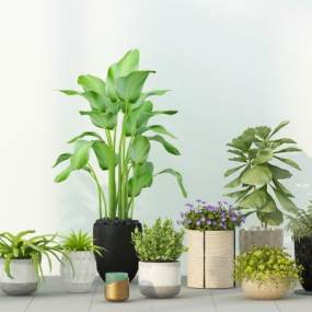 绿植盆栽植物花盆组合 3D模型【ID:241480812】