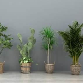 现代绿植盆栽盆景组合3D模型【ID:235786825】