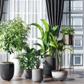 現代輕奢植物3D模型【ID:244004866】