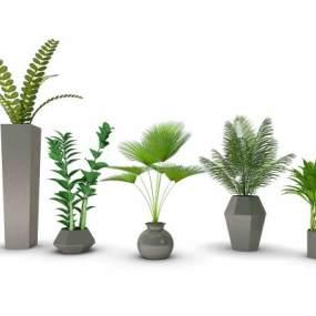 现代盆栽绿植组合3D模型【ID:235965812】