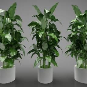现代风格植物3D模型【ID:247385834】