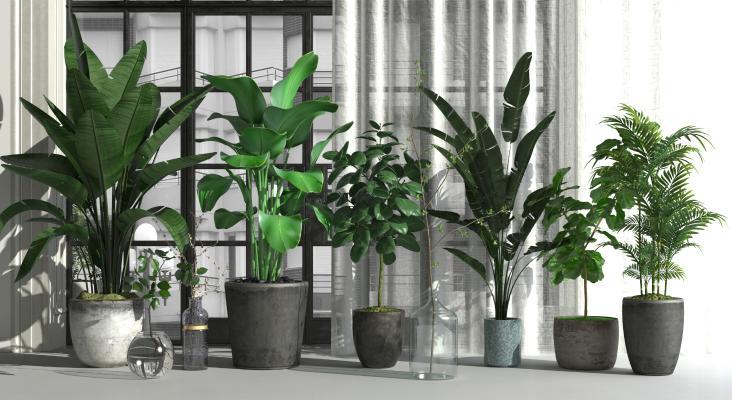 北欧绿植盆栽组合3D模型【ID:245936893】