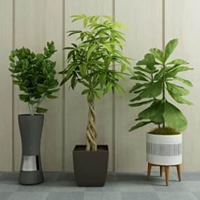 现代绿植盆栽3D模型【ID:231639843】
