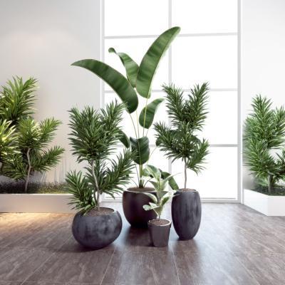 現代植物盆栽組合3D模型【ID:249452894】