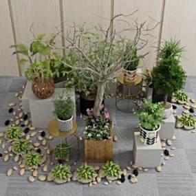 现代植物盆栽3D模型【ID:236250845】