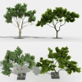 现代景观树3D模型【ID:233752859】