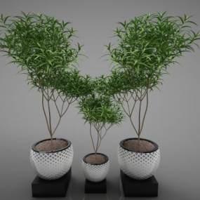 現代風格植物3D模型【ID:252547880】