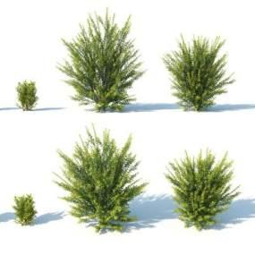 現代灌木3D模型【ID:249240824】
