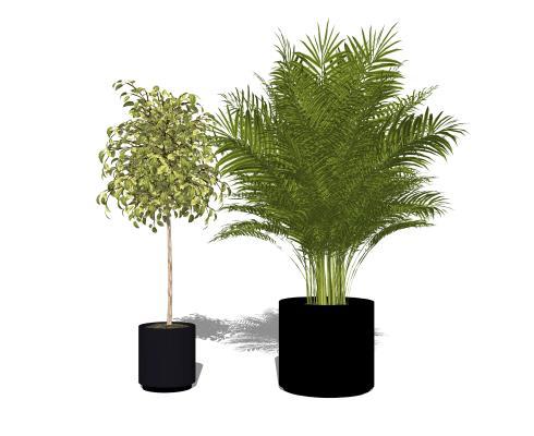 現代植物盆栽組合SU模型【ID:151429856】