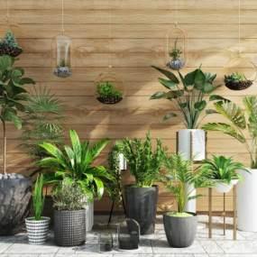 现代阳台绿植盆栽吊篮摆件组合3D快三追号倍投计划表【ID:233753826】