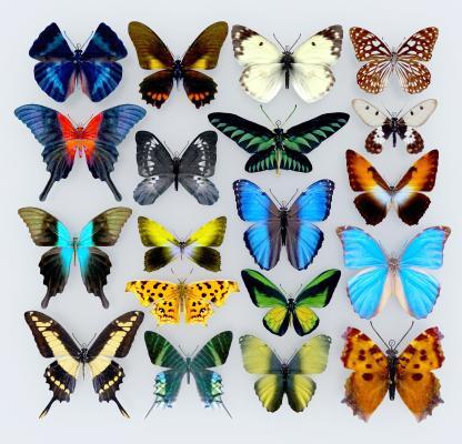 现代蝴蝶标本3D模型【ID:345136015】