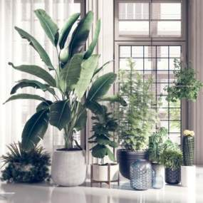 现代绿植盆景盆栽组合3D模型【ID:234927865】