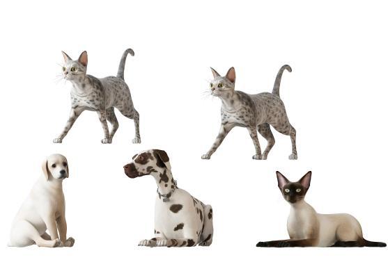 动物3D模型【ID:341752057】