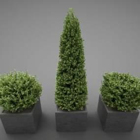 现代风格植物3D模型【ID:248855846】