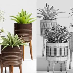 北欧植物盆栽3D模型【ID:235770877】