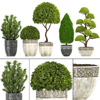 Plants國外3D模型【ID:231777864】