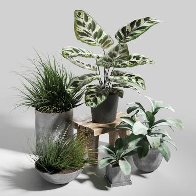 现代花盆盆栽3D模型【ID:250114843】