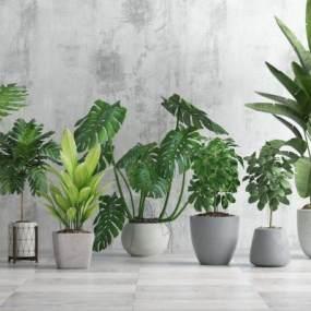 现代植物3D模型【ID:244394802】